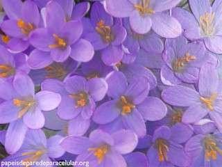Papel de parede para celular flores lils com efeito 3d 320x240 thecheapjerseys Gallery