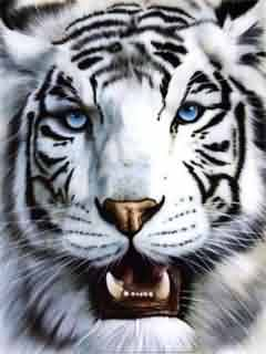 Papel de parede para celular tigre branco 240x320 animais tigre branco 240x320 altavistaventures Choice Image